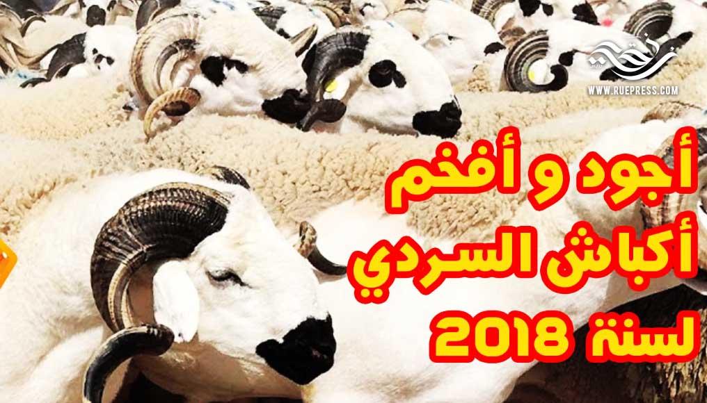 أكبر وأفخم أكباش السردي المغربية لعيد الأضحى 2018